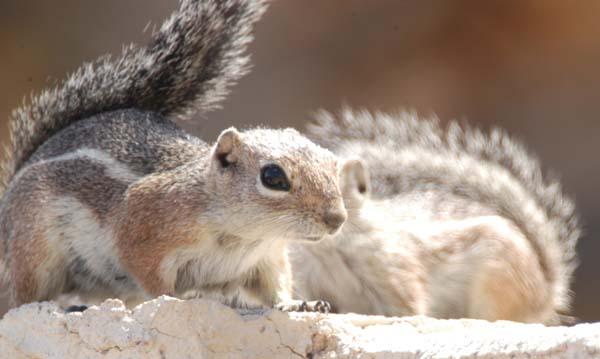 Squirrels And Chipmunks | Furry Talk